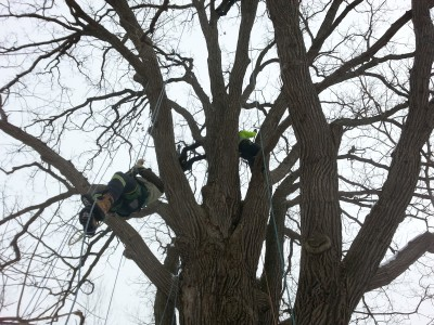 climbing a tree with ropes